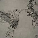 Humming bird by Aestheticz .
