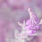 ~But I think beautiful is simple and elegant, like a ballad with simple harmony~ by Janitka
