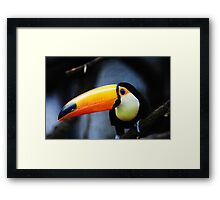 What Did You Say? Toco Toucan Framed Print