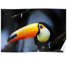 What Did You Say? Toco Toucan Poster