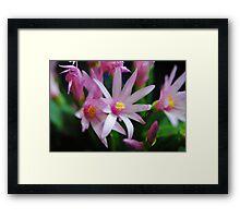 Pink Sunrise Cactus Flowers Framed Print