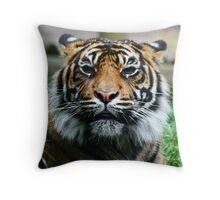 Tiger! Throw Pillow