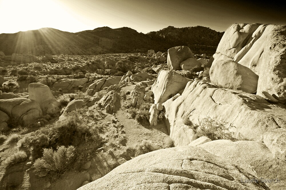 Hot Desert Sun by Laurie Search
