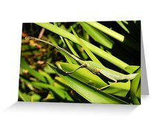 Violet Stick Insect Greeting Card