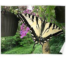 Flight of a beauty... Poster