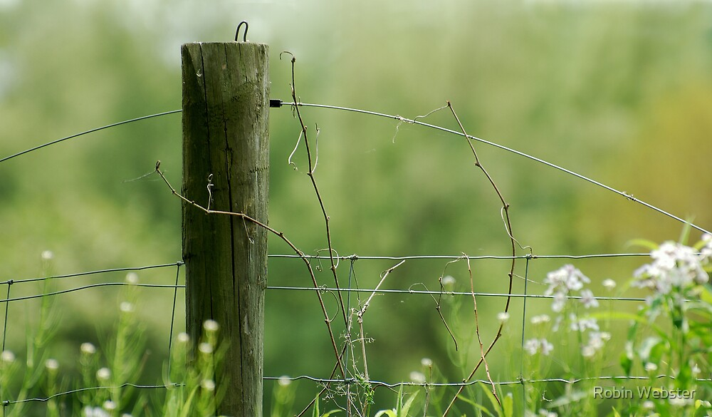 The Fence Post by Robin Webster