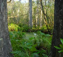 Egret in the Great Corkscrew Swamp by David Lee Thompson