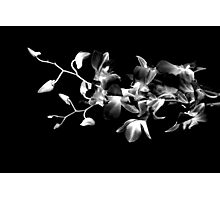 Orchid inspiration #2 Photographic Print