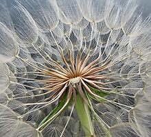 Macro Spores by Corey Bigler