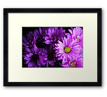 Purple Daisy Bouquet Framed Print