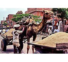 Beast of burden, Rajasthan Photographic Print