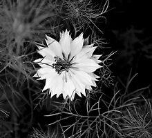 Edie's Flower by Mark Chevalier