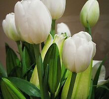 White tulips by Tracey McKenzie
