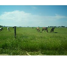 A day of Horses. Photographic Print