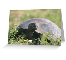 Tortoise Greeting Card