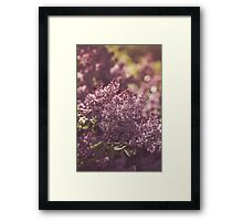 Dream Flower 49 Framed Print