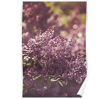 Dream Flower 49 Poster