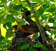 Mama Robin and Babies by Jan  Tribe