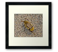 Bumble Scarab Framed Print
