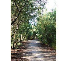 Let's Take A Bush Walk Photographic Print