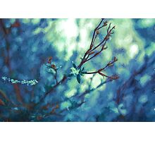 Painted Spring Blossom Photographic Print