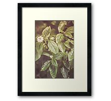 Dream Flower 50 Framed Print
