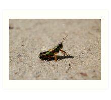 Green Cricket Art Print