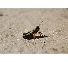 Green Cricket Photographic Print