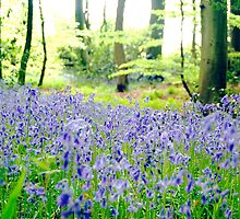 Bluebell Woods by Alastair Johnston