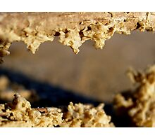 Sand Fangs Photographic Print