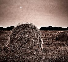 Cans of Hay by Karyn Knight