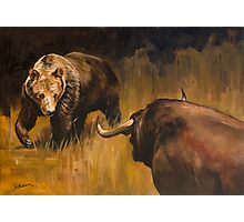 Bear Vs Bull Photographic Print