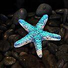 Starlight by Jamie Lee