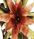 Star Plant by DomaDART