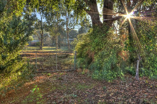 Paddock Gate, Bridgetown, Western Australia by Elaine Teague