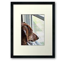 Miss. Ginny Framed Print