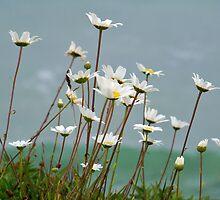 Blossoms of the Sea by Dandelion Dilluvio