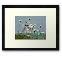 Blossoms of the Sea Framed Print
