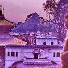Monkey business, Nepal by John Spies