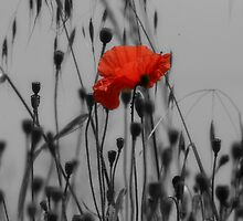Poppy by Pamela Jayne Smith