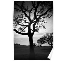 Branched but not broken Poster