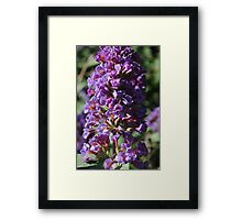 Purple Stalk Flowers Framed Print