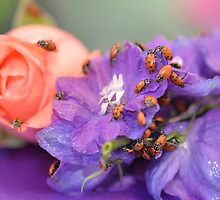 The Lady Bug March  by Judy Grant