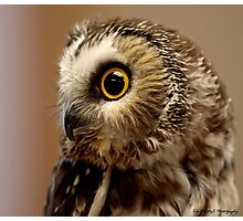 My Owl Muse Photographic Print