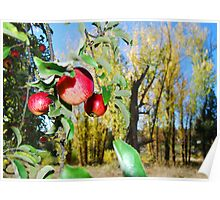 apples and cottonwoods Poster