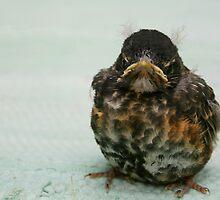 Little Grumpy by tanmari