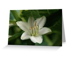 Hiding Hosta Flower Greeting Card