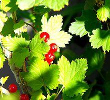 Redcurrant Bush by Jan  Tribe