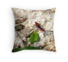 Copulating Insects.. just for fun! Throw Pillow