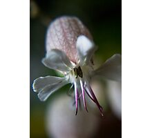 Like octopus (from wild flowers collection) Photographic Print